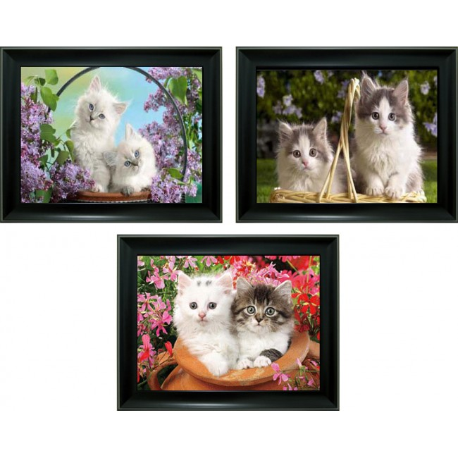 3D Lenticular picture w/ frame - Kitten Triple Images