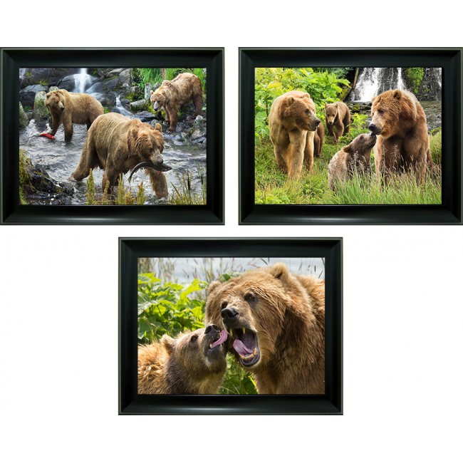 3D Lenticular picture w/ frame - Bear & Cub Triple Images
