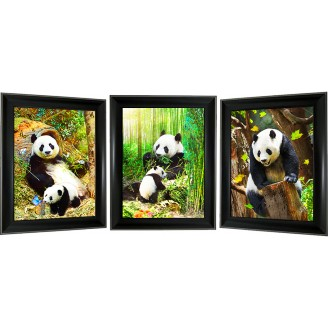 3D Lenticular picture w/ frame - Panda Triple Images