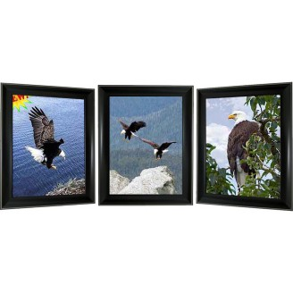 3D Lenticular picture w/ frame – Eagle Triple Images