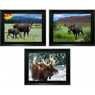 3D Lenticular picture w/ frame – Moose Triple Images