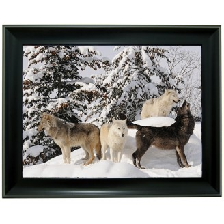 3D Lenticular picture w/ frame Wolf