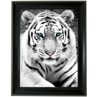 3D Lenticular picture w/ frame White Tigers