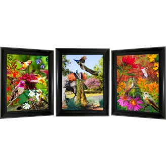 3D Lenticular picture w/ frame - Hummingbird & Peacock Triple Images