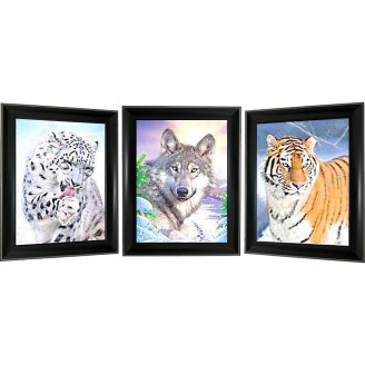 3D Lenticular picture w/ frame – Wolf & Tiger Triple Images