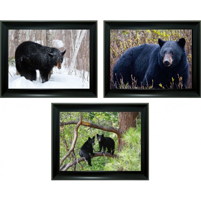 3D Lenticular picture w/ frame – Black Bear Triple Images