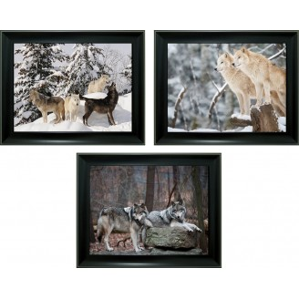 3D Lenticular picture w/ frame – White Wolf Triple Images